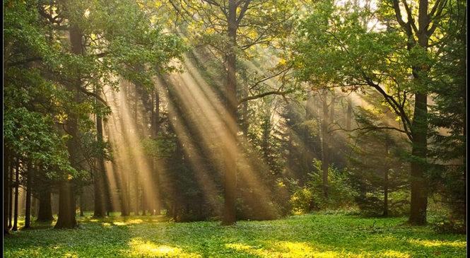 «Возрождение лесов и повышение осведомлённости об их значимости»