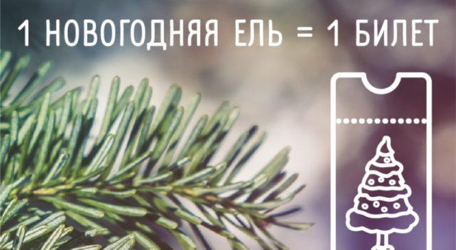 В парке им. А.Г. Николаева стартовала акция по сбору новогодних елей