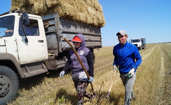 Уборочные агрегаты СХПК «Дружба» сосредоточены на хлебном массиве, а также на заготовке сена.