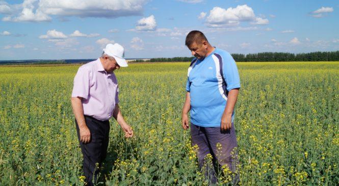 Уборочная работа  в сельхозпредприятиях района