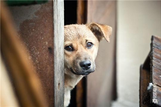 О вариантах решения проблемы животных без владельцев (бродячих собак)